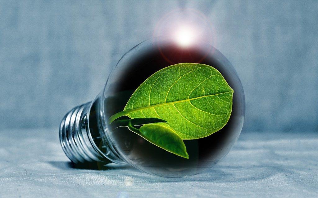 luz_energia_renovable_2019